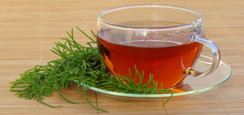 Conheça o poder do chá de cavalinha