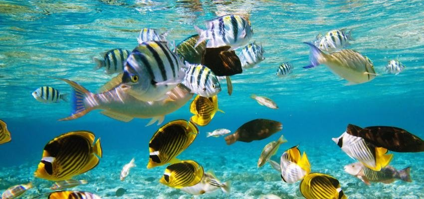 Sonhar com peixe: qual o significado