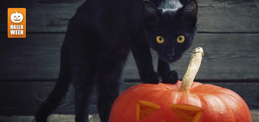 Simpatia do Gato Preto no Halloween
