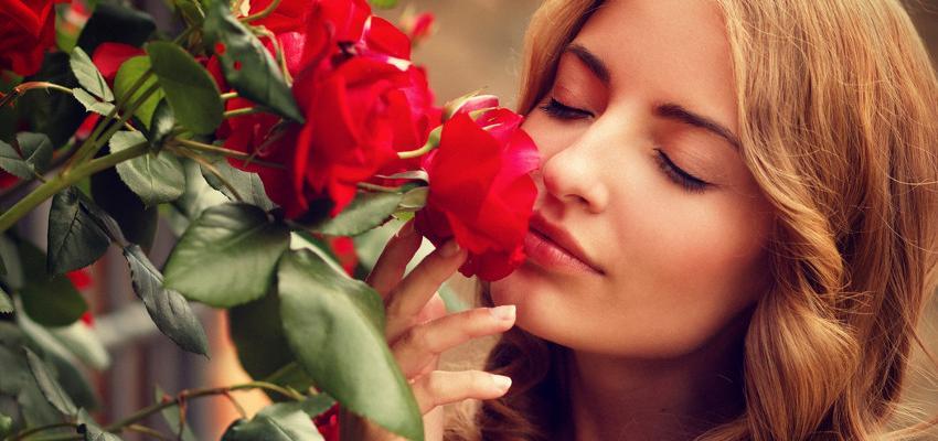 Horóscopo das Flores: saiba a melhor planta para seu signo