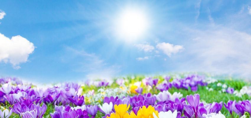 Cultive o seu jardim espiritual: saiba como ser mais feliz