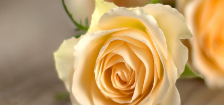Mensagens para o Dia das Mães: conheça a história e homenagens desta data