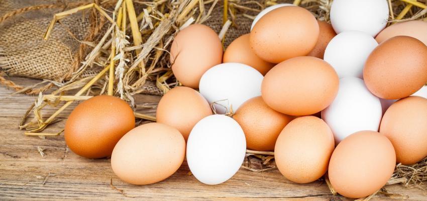 Sonhar com ovo - Dinheiro? Renovação? O que significa?