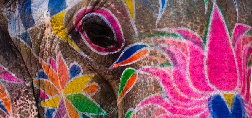 Elefante indiano: os significados do amuleto de sorte milenar