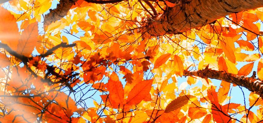 Encantamento de amor – como prender um amor com o encanto das árvores
