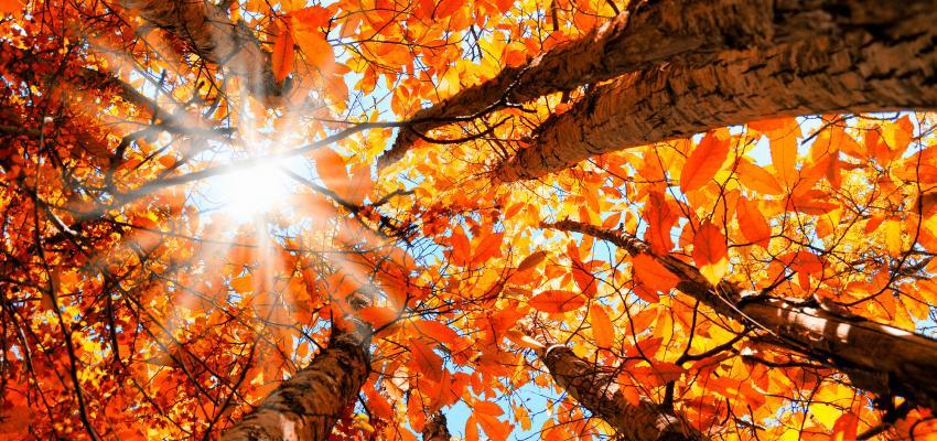 Equinócio de outono: faça o ritual para celebrar a chegada da estação