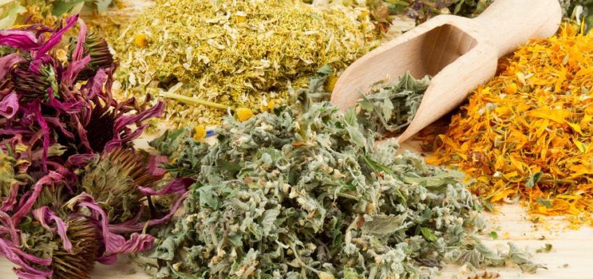 Ervas sagradas para defumação e purificação do ambiente