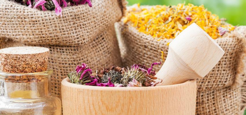 Ervas de Ogum: suas utilizações em rituais e propriedades de cura