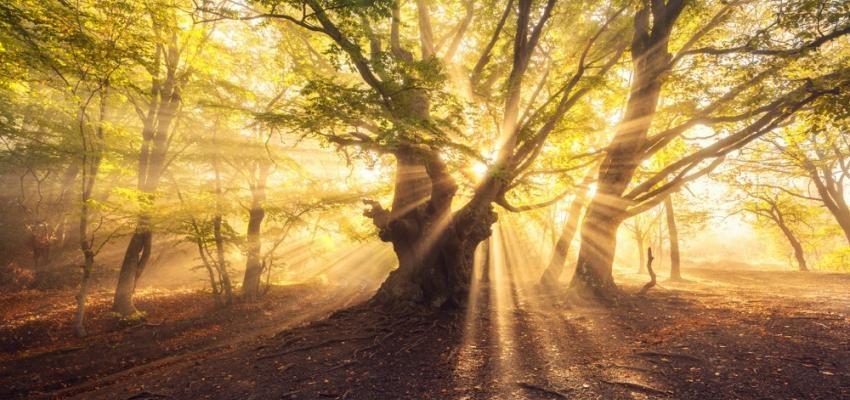 espiritismo mediunidade