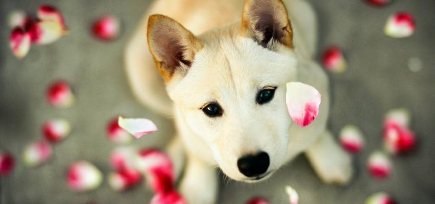 A espiritualidade dos cães segundo o Espiritismo