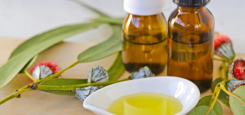 Óleo essencial de eucalipto contra gripes e resfriados