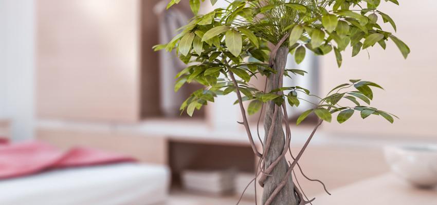 Como decorar e organizar sua casa de acordo com as técnicas de Feng Shui