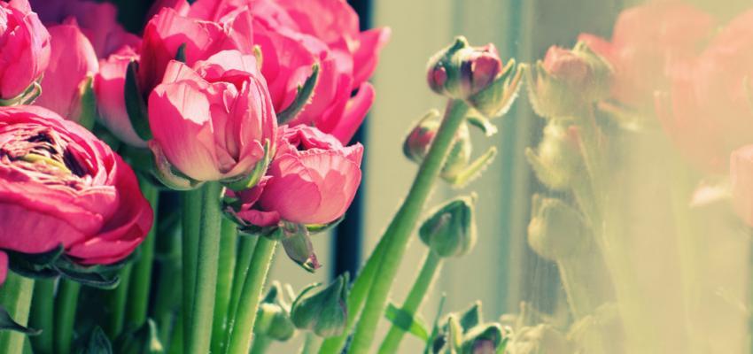 As plantas e o Feng Shui: como conciliar sua utilização em casa