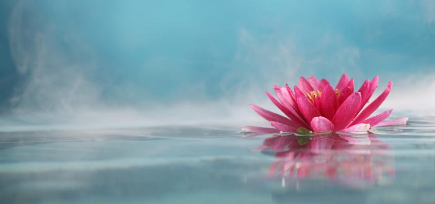 Flor de Lótus - significado e simbolismo da flor sagrada