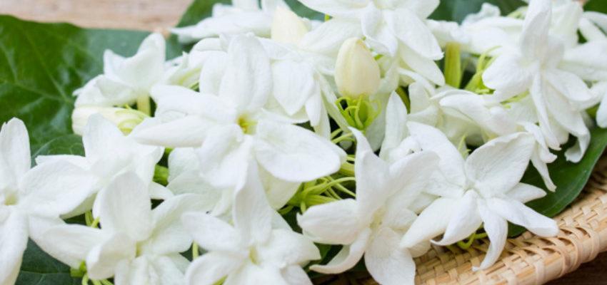 Florais para depressão: essências que salvam vidas
