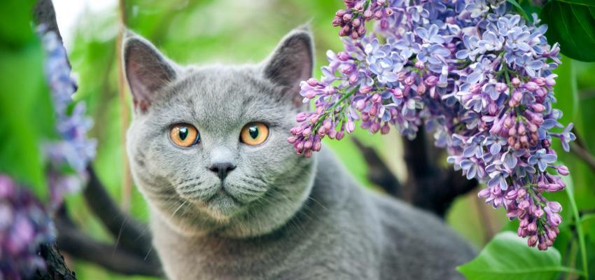 Florais para gatos: essências para saúde e bem-estar