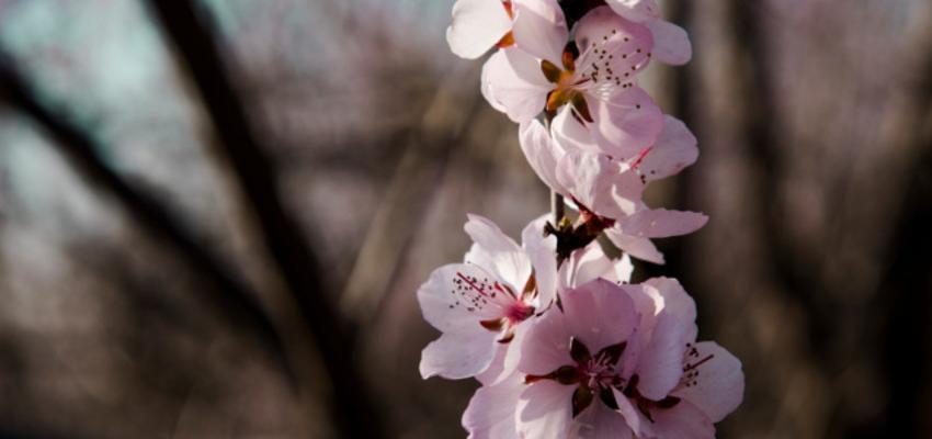 Florais Etéricos: o que são e como funciona o tratamento?