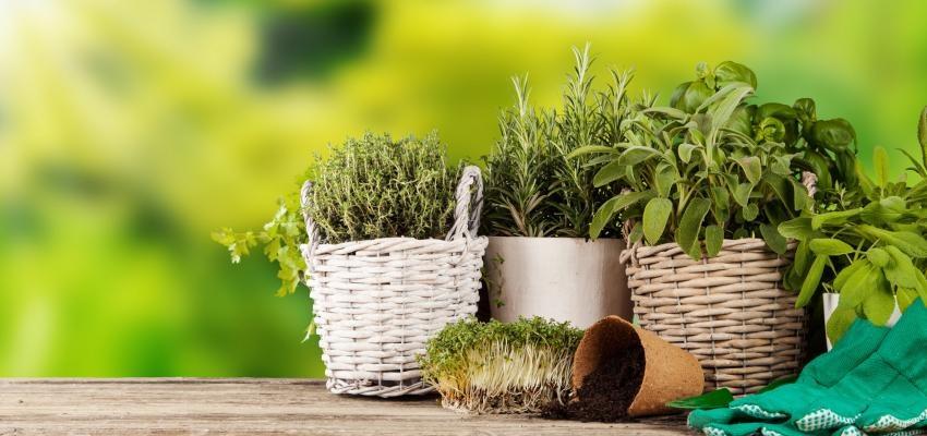 Renove suas energias, conheça plantas que dão sorte !