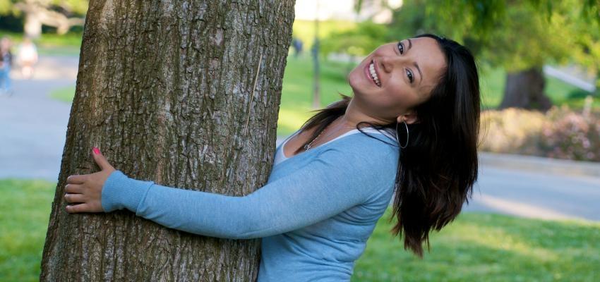 Cura pela natureza: aprenda sobre o poder das árvores