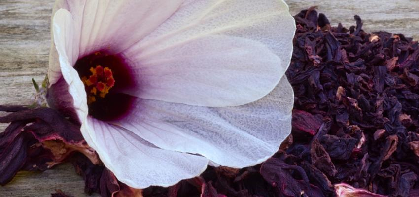 Os benefícios de tomar chá de hibisco
