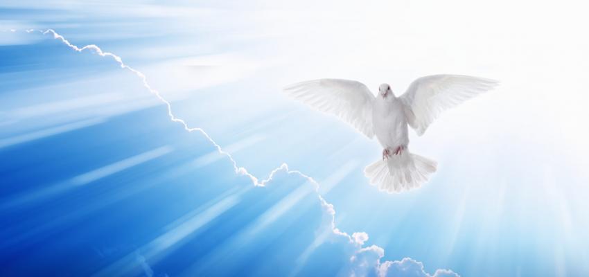 Entenda o significado da Pomba do Espírito Santo
