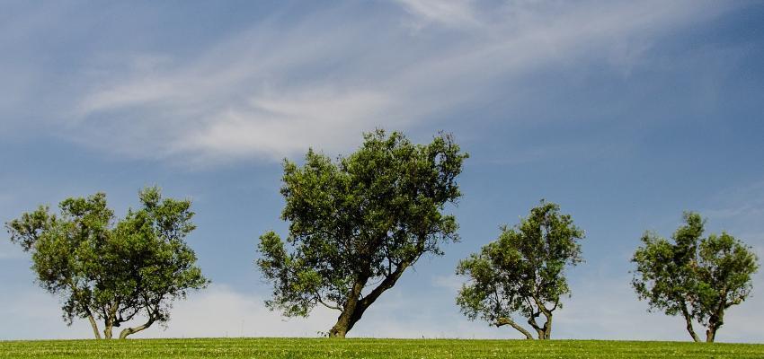 Horóscopo das árvores: descubra qual o seu signo