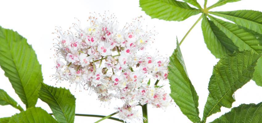 Utilizar florais para tratar alcoolismo funciona? Descubra