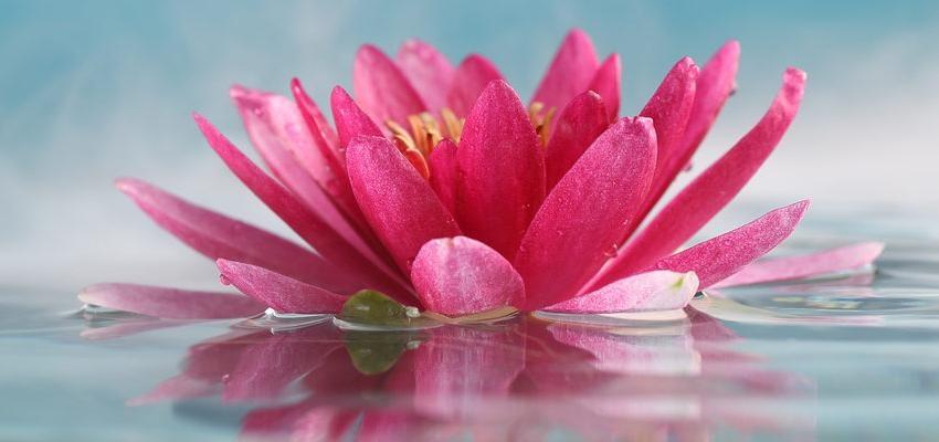10 objetos de Feng Shui que vão atrair prosperidade para sua casa