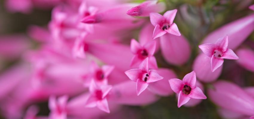 Conheça os Florais de Bach para quem está sofrendo por amor