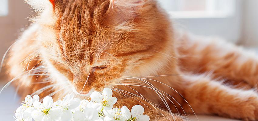 Benefício das ervas aromáticas para ajudar os nossos pets