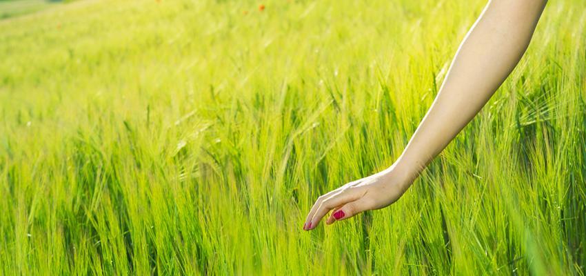 Salmos do dia: tranquilidade e paz de espírito com o Salmo 20