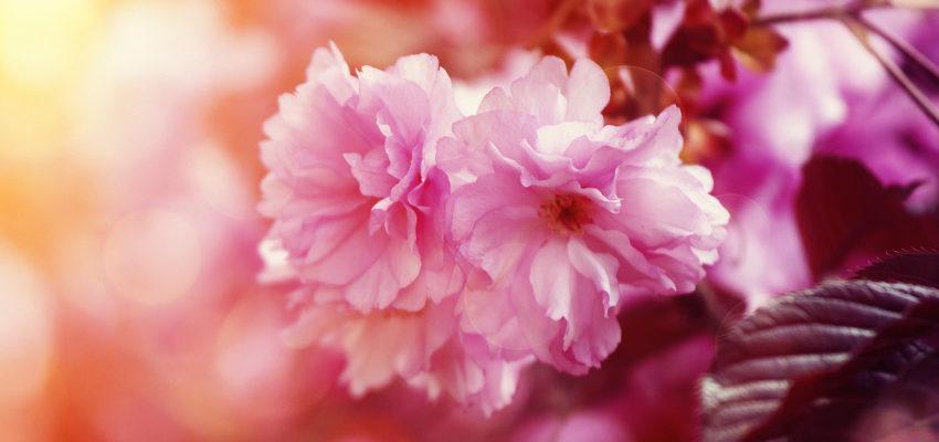 O uso de florais possui efeitos colaterais? Veja a resposta