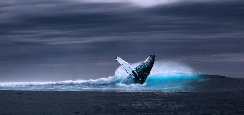 Baleia Azul – um jogo mortal. Entenda como funciona e quais os riscos