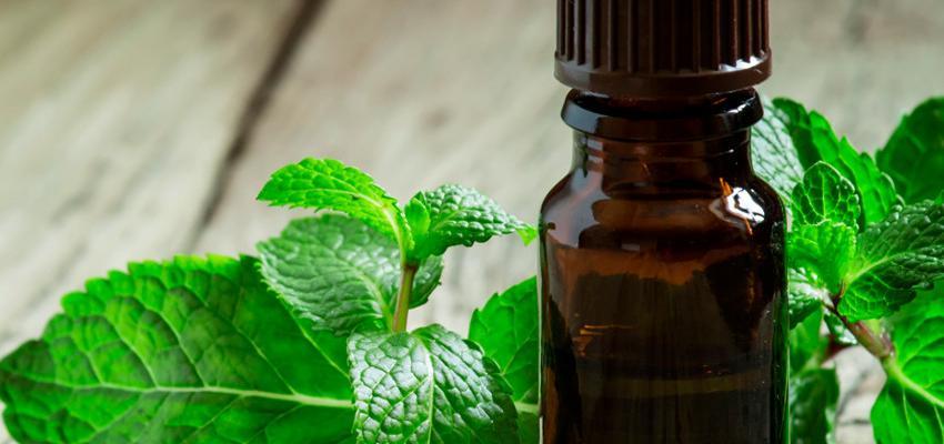 A refrescância e relaxamento do óleo essencial de menta