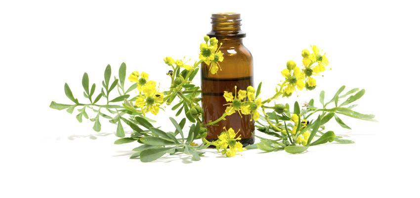 Óleos essenciais na aromaterapia - descubra seus efeitos de cura