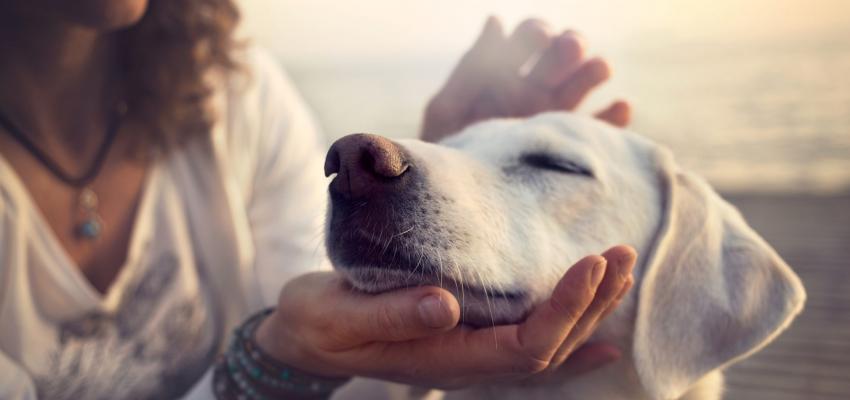 Passe espiritual em animais – como funciona?