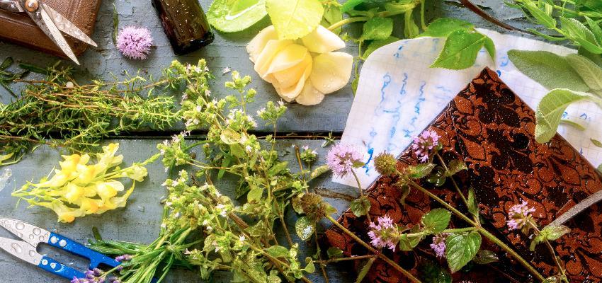 Aprenda o passo a passo para montar o vaso das 7 ervas