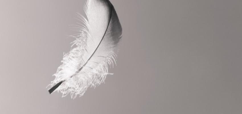 Como incluir penas na decoração para uma mente mais tranquila