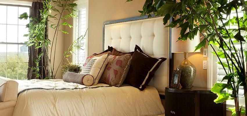 Plantas para ter no quarto para dormir melhor