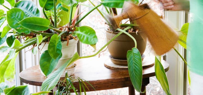 Plantas para casa – as espécies ideais e seus benefícios