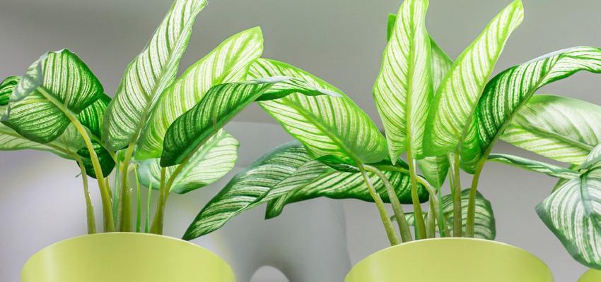 5 plantas para purificar o ar da sua casa