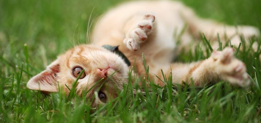 Descubra qual é o significado de sonhar com gato