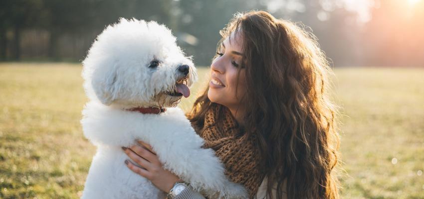 As raças de cachorro que mais combinam com os signos do zodíaco
