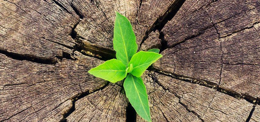 O poder das plantas para afastar a inveja e mau olhado