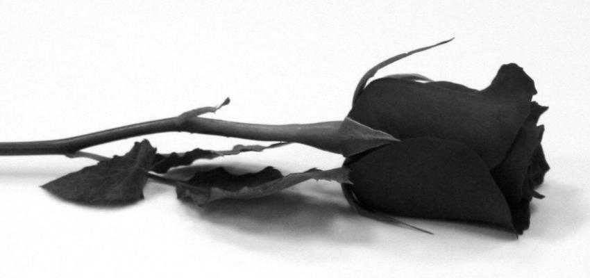 Você conhece a Pomba Gira Rosa Negra? Saiba mais sobre ela