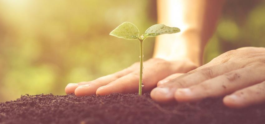 Melhor lua para plantar em 2018: planeje o seu jardim