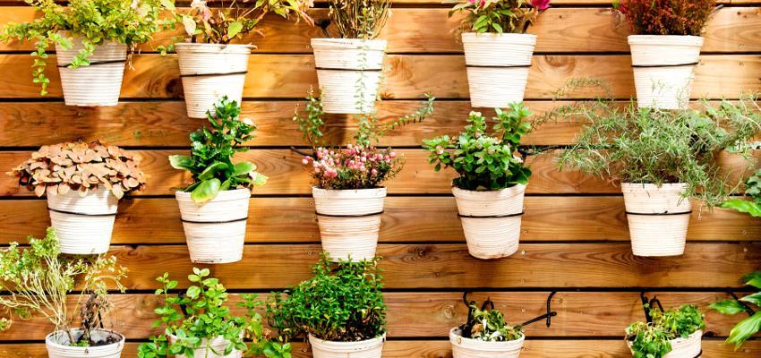 Descubra as plantas que atraem riqueza e prosperidade para sua vida