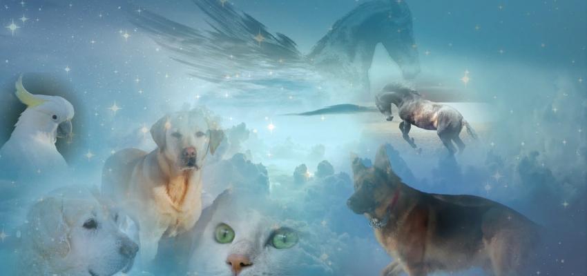 Reencarnação dos animais: os nossos animais reencarnam?