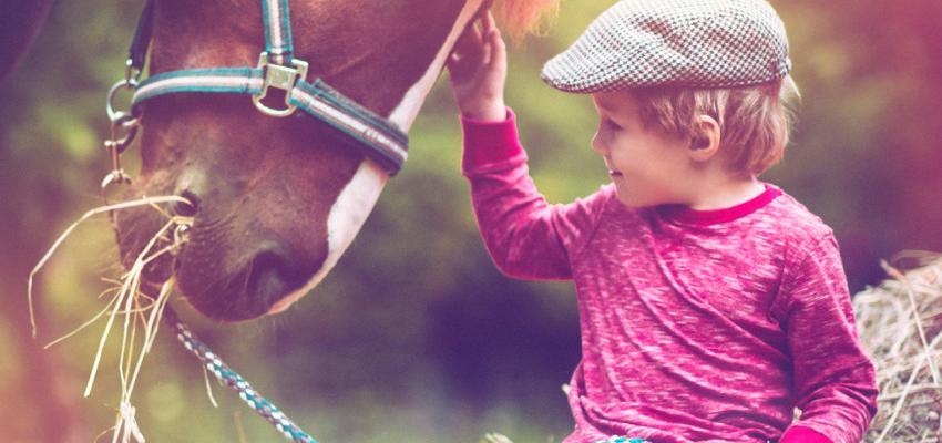 Descubra as indicações e benefícios do Reiki em animais