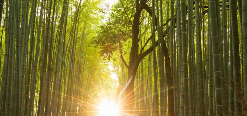 Qual a diferença entre religião e espiritualidade?